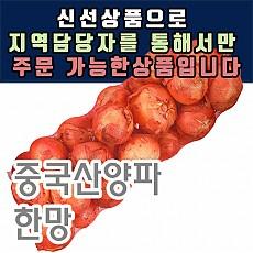 양파(중국산)